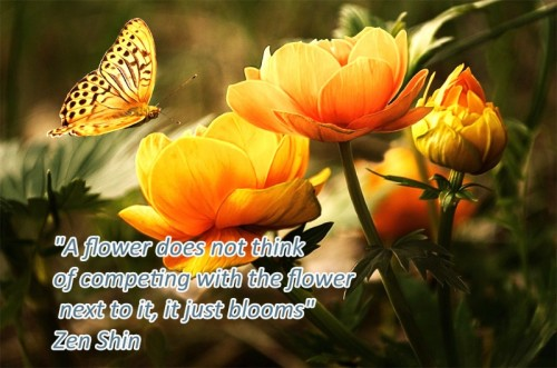 "Counsellor & Psychotherapist, Donegal Town, Ireland - quote - ""A flower does not think of competing with the flower  next to it, it just blooms""  Zen Shin"
